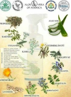 Aloe Vera, Health And Wellness, Health Fitness, Forever Living Products, Did You Know, Plants, Better Health, Beautiful, Google