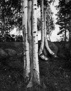 Photographer Arno Rafael Minkkinen Seamlessly Integrates His Body with the Natural World