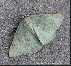 Grass-Emerald-2