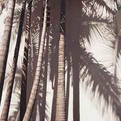 Find images and videos about summer, aesthetic and nature on We Heart It - the app to get lost in what you love. Beige Aesthetic, Summer Aesthetic, Minimalism Living, Foto Instagram, Land Scape, Palm Trees, Palm Tree Print, Summer Vibes, Photo Wall