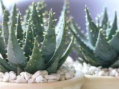 Pflanzen, die auch leicht im Heim gedeihen.