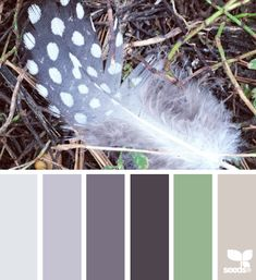 feathered tones (design seeds)