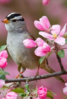 Spring Animal Wallpaper for Desktop 49 images Spring Ani…, - Tiertapete iphone Pretty Birds, Love Birds, Beautiful Birds, Spring Animals, Spring Birds, Sparrow Bird, Flower Branch, Happy Paintings, Wild Nature