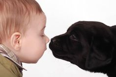A sweet Therapy Dog helps children feel safe