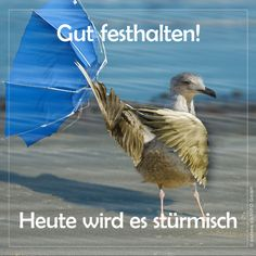 Heute wird es stürmisch Hold on tight! Today it gets stormy. Even for wind-beaten northern lights like the seagull … Sea Glider Rocker Cushions, Slider Exercises, Quilt Batting, Face Down, Morning Humor, Health Promotion, Be A Nice Human, Workout Humor, Keep Smiling