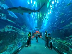 Fashion Show Watch: Guinness World Record: Dubai Aquarium and Under Water Zoo