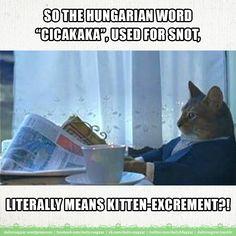 cicakaka [ˈtsitsɑkɑkɑ] – nasal mucus; snot  [Literally::: kitten excrement]   This word is mainly used by the children.   °   cica [ˈtsitsɑ] – kitten; kitty; cat  cicus [ˈtsitsuʃ] – kitty; pussycat  cicamica [ˈtsitsɑmitsɑ] – pussycat  macska [ˈmɑtʃkɑ] – cat   °   kaka [ˈkɑkɑ] – excrement (childish expression)  kaki [ˈkɑki] – excrement (childish expression)  kaksi [ˈkɑkʃi] – excrement (childish expression)  szar [ˈsɑr] (vulgar expression)  1) shit (solid excretory product evacuated from the…