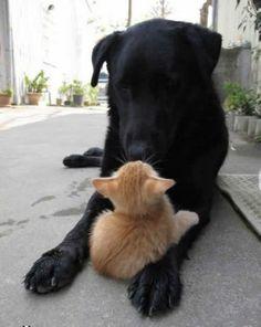 dog and kitten, best friends