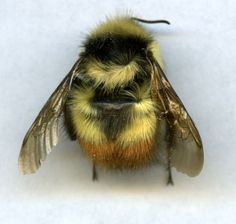7: I kinda want to pet a bee???