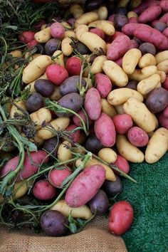 6 lbs. SEED POTATOES - The Red, White, & Blue America Collection - Organic
