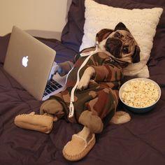 """Doug the Pug — """"Netflix, party of one"""" -Doug"""