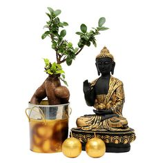 Looking for #Bonsai #Plant for any ocassion? http://bit.ly/Vmeyf0