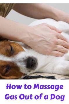 Massage, Dog, Pets, Animals, Diy Dog, Animaux, Doggies, Animal, Animales