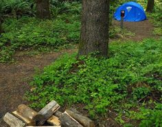 A hike-in campsite at Stub Stewart State Park in the Coast Range foothills west of Portland.