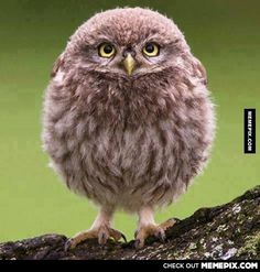 what the heck kind of owl is this!! ITS SO CUTE!!!!