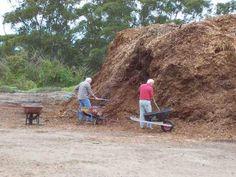 О пользе опилок - как влияют опилки на почву? Опилки как мульчирующий материал, опилки в парниках и теплицах — FloraPrice.Ru
