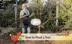 Plant a Bare Root Fruit Tree - video