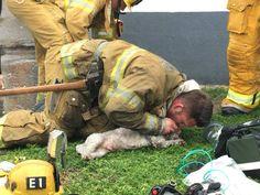 chien réanimé par des pompiers