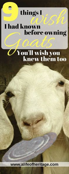 9 things I wish I had known before owning goats. Don't you agree with #5?? But does it stop us from owning them?? Nope! Once a goat lover, always one.