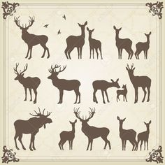 Vintage Deer And Moose Illustration Collection Royalty Free Cliparts, Vectors, And Stock Illustration. Image 10492637.
