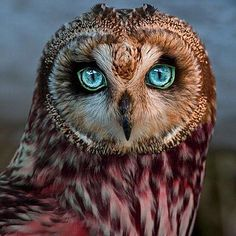 "Earth Pics  on Instagram: ""Beautiful Owl"""