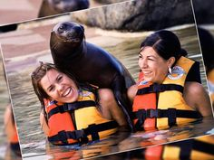 Interact with dolphins, manatees & sea lions!