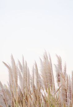 winter in california is part of Minimalist photography - Of Wallpaper, Wallpaper Backgrounds, Wallpaper Plants, Iphone Wallpaper, Beige Aesthetic, Minimalist Photography, Pampas Grass, Photo Instagram, Aesthetic Pictures