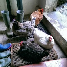 It'll be raining then?! (Our girls finding a dry spot in our porch!)