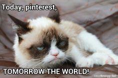 Lol grumpy cat is taking ocer
