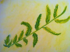 Our study of Ferns~ Waldorf Class 5 ~ Botany  This Convivial Life | Waldorf inspired, minimalist & a little bit hippy
