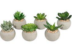 Dekorative Sukkulente – pflegeleichte Pflanze mit sinnlicher Ausstrahlung