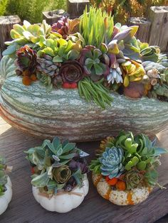 The French Tangerine: ~ pumpkins and succulents