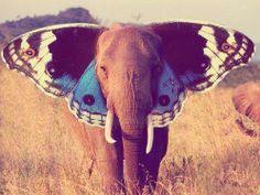 .i love elephants.