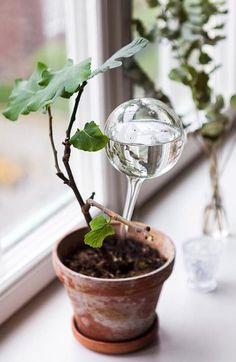Green Thumb Tweak: Watering Bulb
