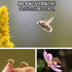 Not all insects are scary…
