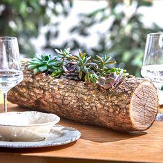 Make a Wood Log Planter for Succulents succulent wood log planter finished shotsucculent wood log planter finished shot Tree Stump Planter, Log Planter, Succulent Planter Diy, Succulent Landscaping, Wooden Planters, Diy Planters, Planting Succulents, Succulents Diy, Tree Stumps
