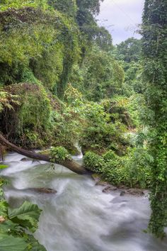 River in Jamaican forest - Stock Photo - Images