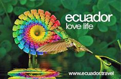 ecuador paisajes collage - Buscar con Google Ecuador, God Forgives, Rainbow Flowers, Everlasting Life, Choose Life, Flowering Trees, Love Life, America, Beautiful