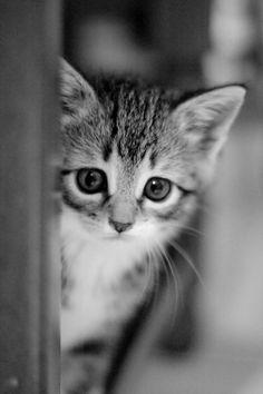 nyashmyashcats:  Follow me: http://vk.com/nyashmyashcats
