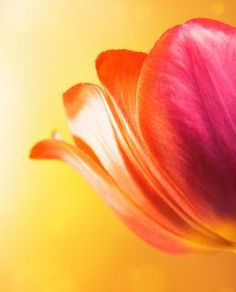 Soft flower background Free Photo