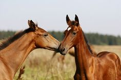 Switzerland is a leader in animal rights legislation, and the impact on horse management is significant.