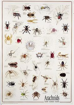 I am so going to decoupage pumpkins this year.  Yep, with all my free time.  I think I'll do an Arachnids print first...