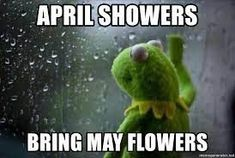 april showers kermit meme Wtf Funny, Funny Texts, Funny Jokes, Funny Gifs, Funny Mom Quotes, Funny Quotes About Life, Kermit Face, Funny Images, Funny Pictures