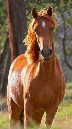 Eldora's trick-riding horse Delilah - a plain chestnut (chestnuts are the most…