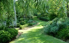 Open Gardens Australia - The Birches. A delightful garden wit formal hedges of camellias, magnolias and box are the perfect foil for the softness of massed azaleas, hydrangeas and superb trees.