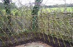 living willow fence - notice arching pattern this person created. You know what I'm thinking. I wonder if red osier would work... it DOES!