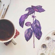 Basil Watercolor