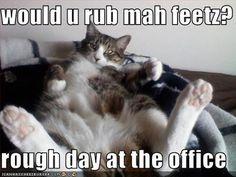 Sure I'll rub your feet!