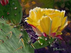 A close-up image of a Prickly Pear Bloom by Diana Madaras.