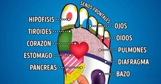 Nothing found for Massage Tips For Amateurs Massage Tips, Massage Benefits, Foot Massage, Massage Therapy, Health Diet, Health And Wellness, Health Fitness, Pituitary Gland, Foot Reflexology